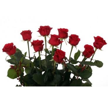 Роза Мирна