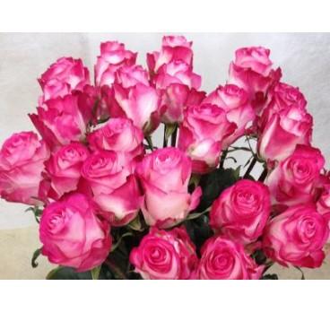Роза High Candy