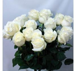 Роза Proud