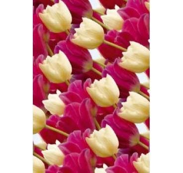 Бумага Подарочная Глянец Тюльпаны